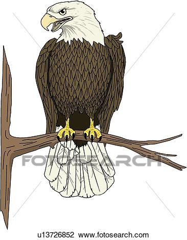 Perchedeagle clipart for photoshop graphic transparent download Free Bird Of Prey Clipart perched, Download Free Clip Art on Owips.com graphic transparent download