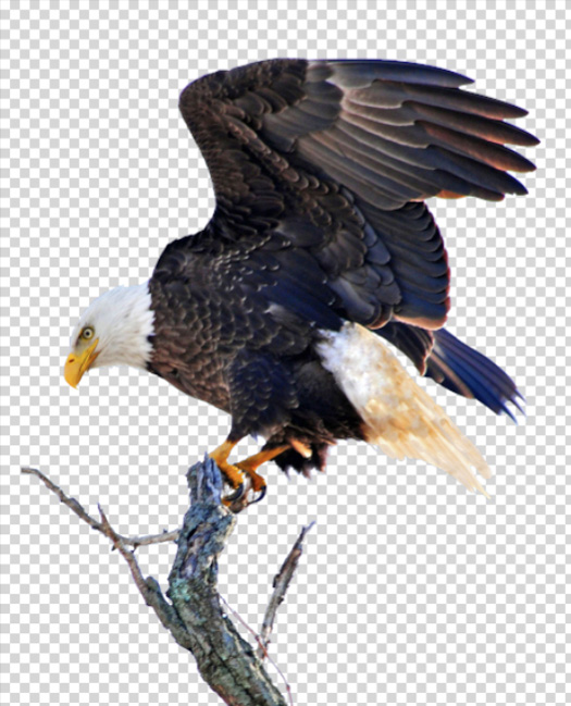 Perchedeagle clipart for photoshop clip free Free Drawn Eagle perched, Download Free Clip Art on Owips.com clip free