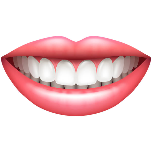 Perfect teeth clipart vector download Perfect Teeth Cliparts 13 - 612 X 612 - Making-The-Web.com vector download