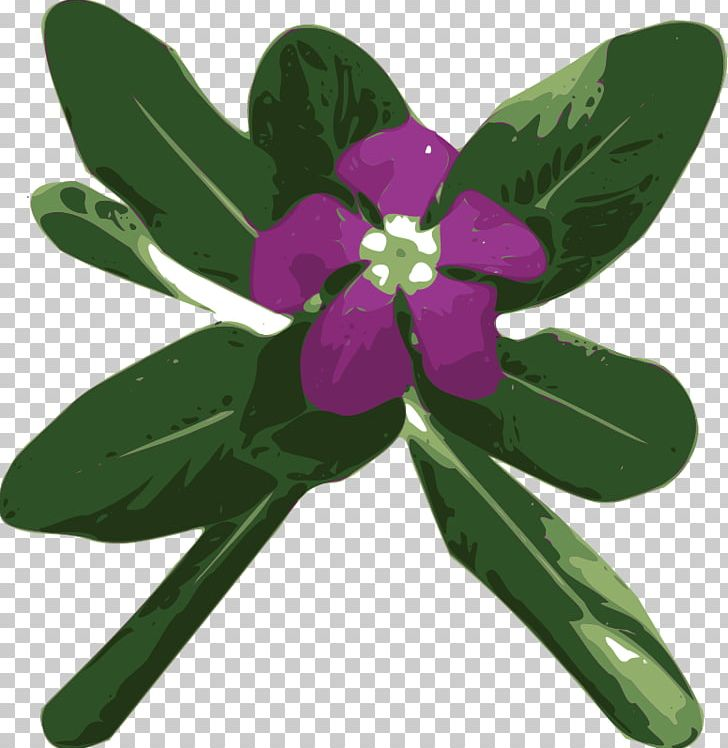 Perriwinkle clipart vector free Myrtle Madagascar Periwinkle Greater Periwinkle PNG, Clipart ... vector free