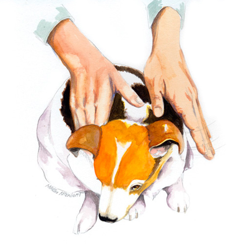 Person handing a treat to a dog clipart banner library How To Massage Your Dog   Modern Dog magazine banner library