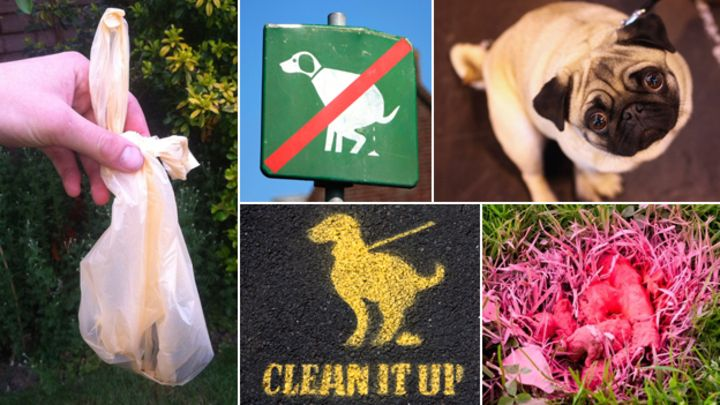 Person handing a treat to a dog clipart clip free library Eight radical solutions to the problem of dog mess - BBC News clip free library
