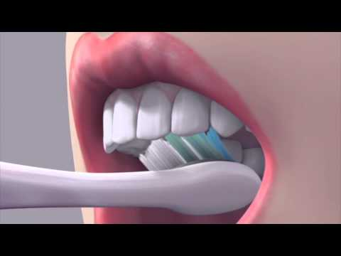 Person smiling which brushing teeth clipart side view picture library download How to brush your teeth - YouTube picture library download