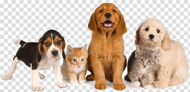 Pet friendly clipart svg Dog Pet sitting Pet–friendly hotels Pet Shop, Pet Icon ... svg