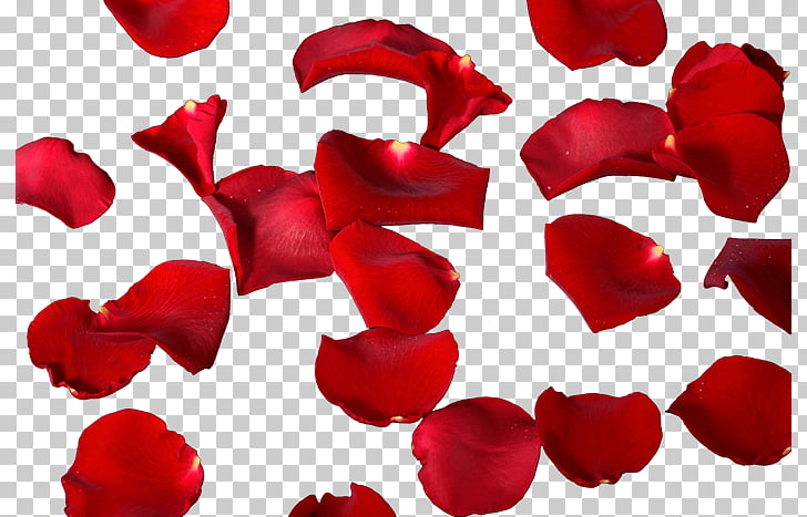 Petalos clipart image library stock Petal Flower Leaf , petalos PNG clipart   free cliparts   UIHere image library stock