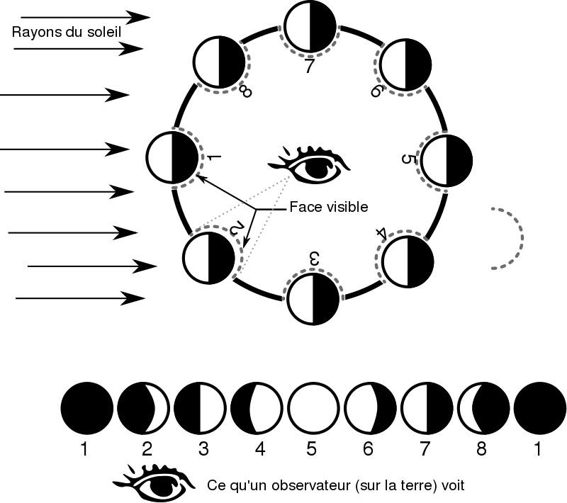 Phases clipart image freeuse Free Clipart: Les phases de la lune - Moon phases | waielbi image freeuse