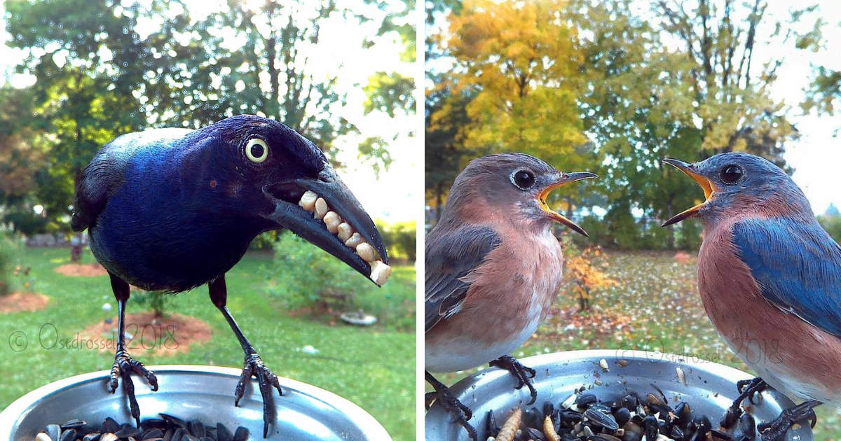 Photobooth birds clipart clip download This Woman Set Up A Feeder Cam For Birds In Her Yard, And ... clip download