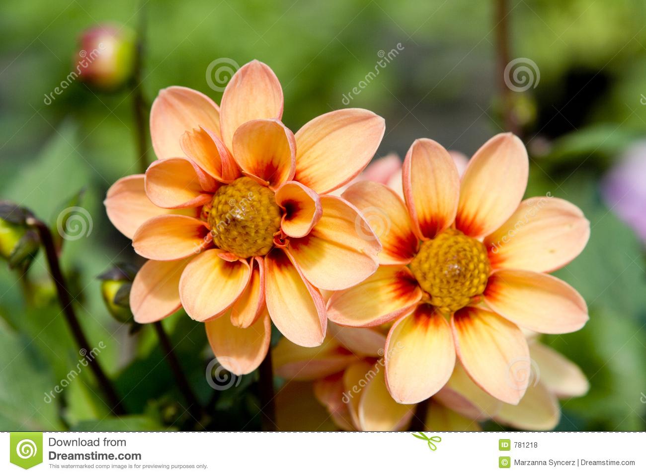 Photos of flowers free svg royalty free Fresh Flowers Royalty Free Stock Photos - Image: 781218 svg royalty free