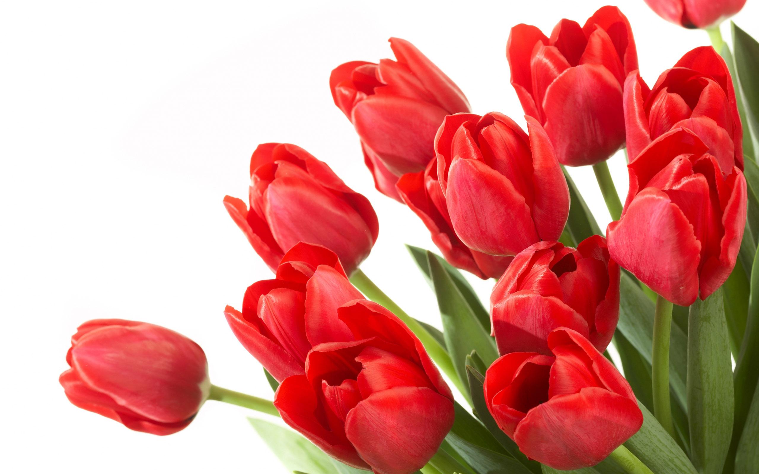 Photos of tulip flowers clip art free Photos of tulip flowers - ClipartFest clip art free