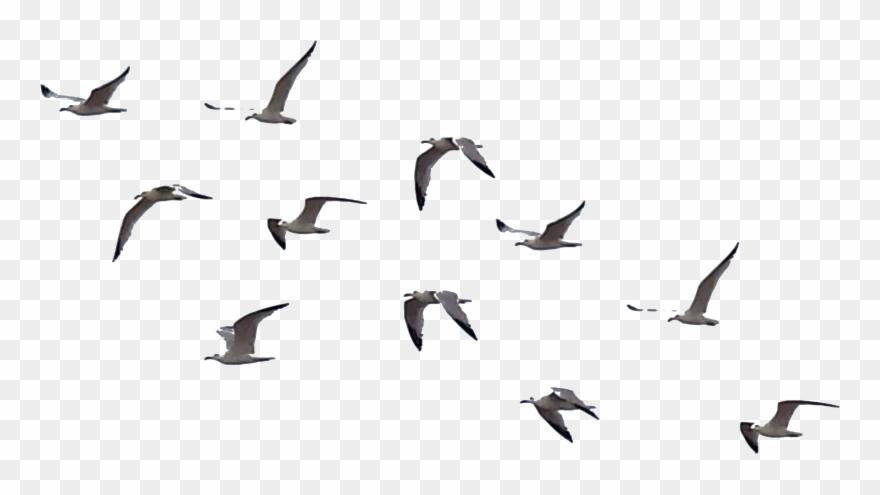 Picsart all clipart jpg transparent download Flying Crows Clipart - All Png For Picsart Transparent Png ... jpg transparent download
