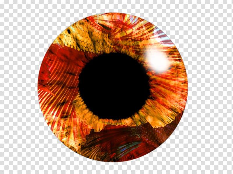 Picsart clipart lens vector transparent stock Eye Light PicsArt Studio , LENS transparent background PNG ... vector transparent stock