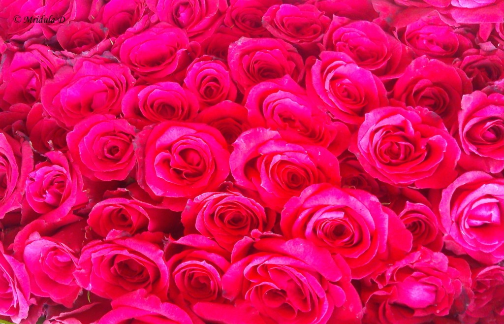 Picture of a big bunch of flowers banner free stock Friday Flowers- A Big Bunch of Red Roses - Travel Tales from India ... banner free stock
