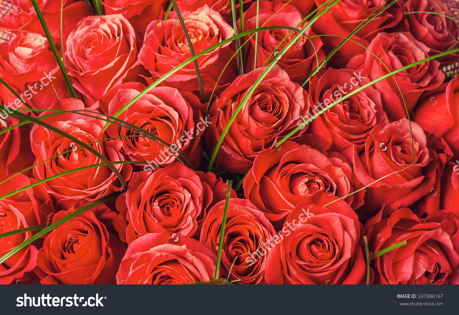 Picture of a big bunch of flowers clip art freeuse library Big Bunch Beautiful Red Roses Flowers Stock Photo 247886167 ... clip art freeuse library