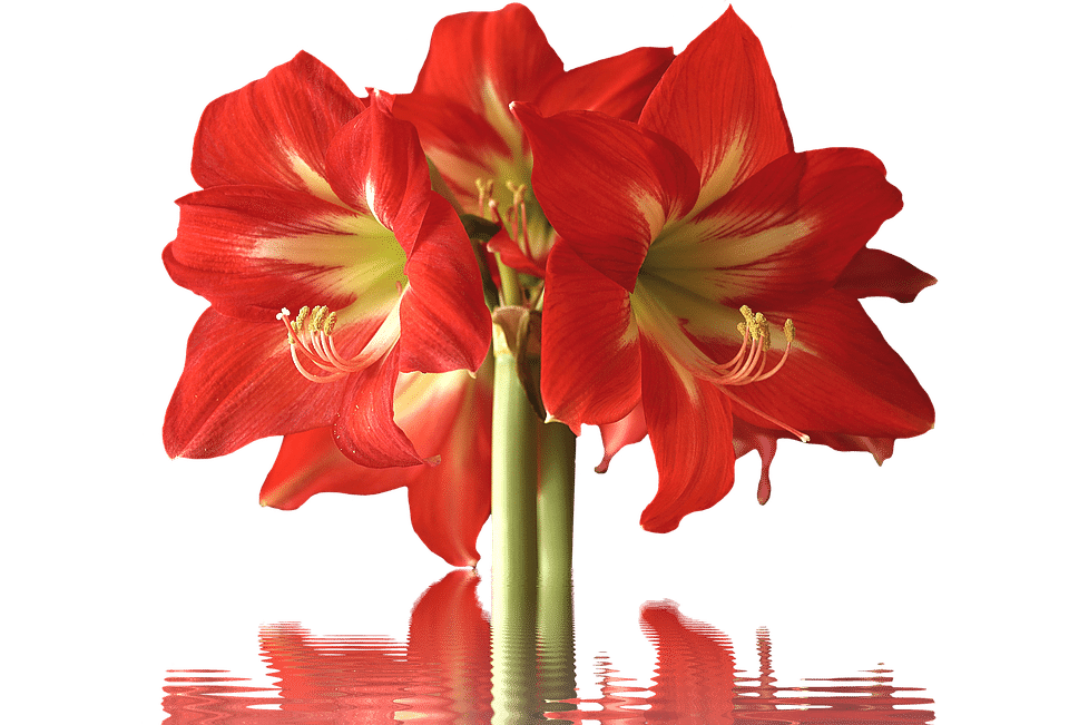 Picture of big bunch of flowers clipart 40+ Types of Red Flowers with Pictures | FlowerGlossary.com clipart