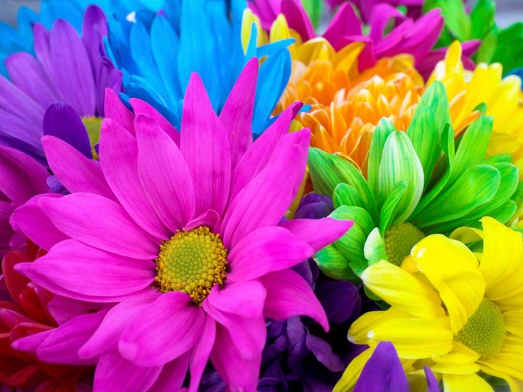 Picture of colorful flowers jpg library Have a blessed weekend | I love, Happy and Flower jpg library
