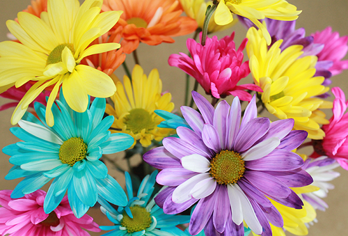 Picture of colorful flowers banner royalty free library photography art mine picture flowers colorful $ slr mothers day ... banner royalty free library