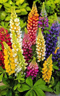 Picture of colorful flowers png library stock 17 Best ideas about Colorful Flowers on Pinterest | Purple plants ... png library stock