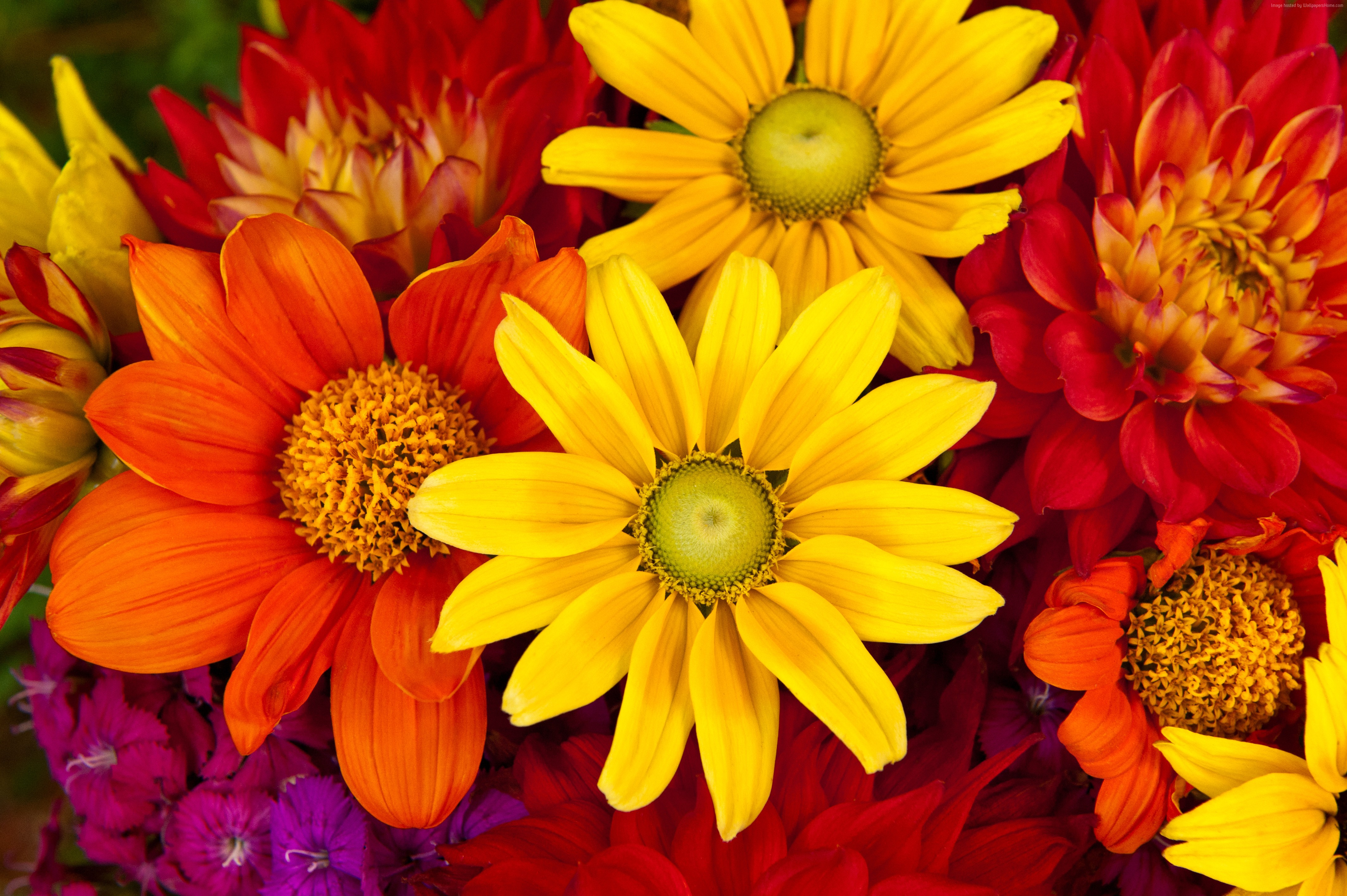 Picture of colorful flowers graphic library library Colorful flower pictures - ClipartFest graphic library library