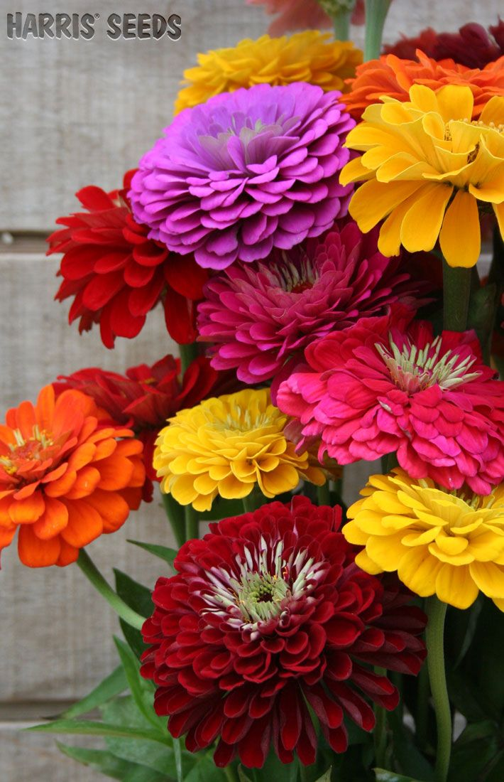 Picture of colorful flowers picture freeuse library 17 Best ideas about Colorful Flowers on Pinterest | Purple plants ... picture freeuse library