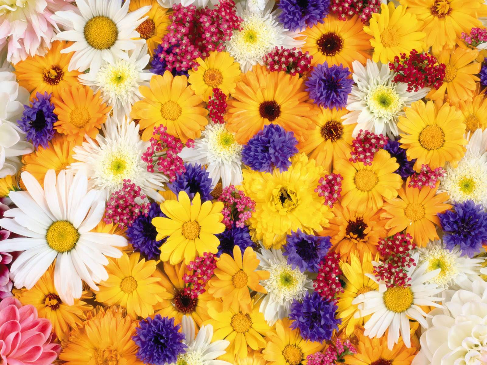 Picture of colorful flowers clipart stock Colorful flowers images - ClipartFest clipart stock