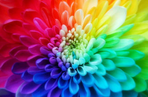 Picture of colorful flowers jpg royalty free download 17 Best images about Flower on Pinterest | Psychedelic, Flower and ... jpg royalty free download