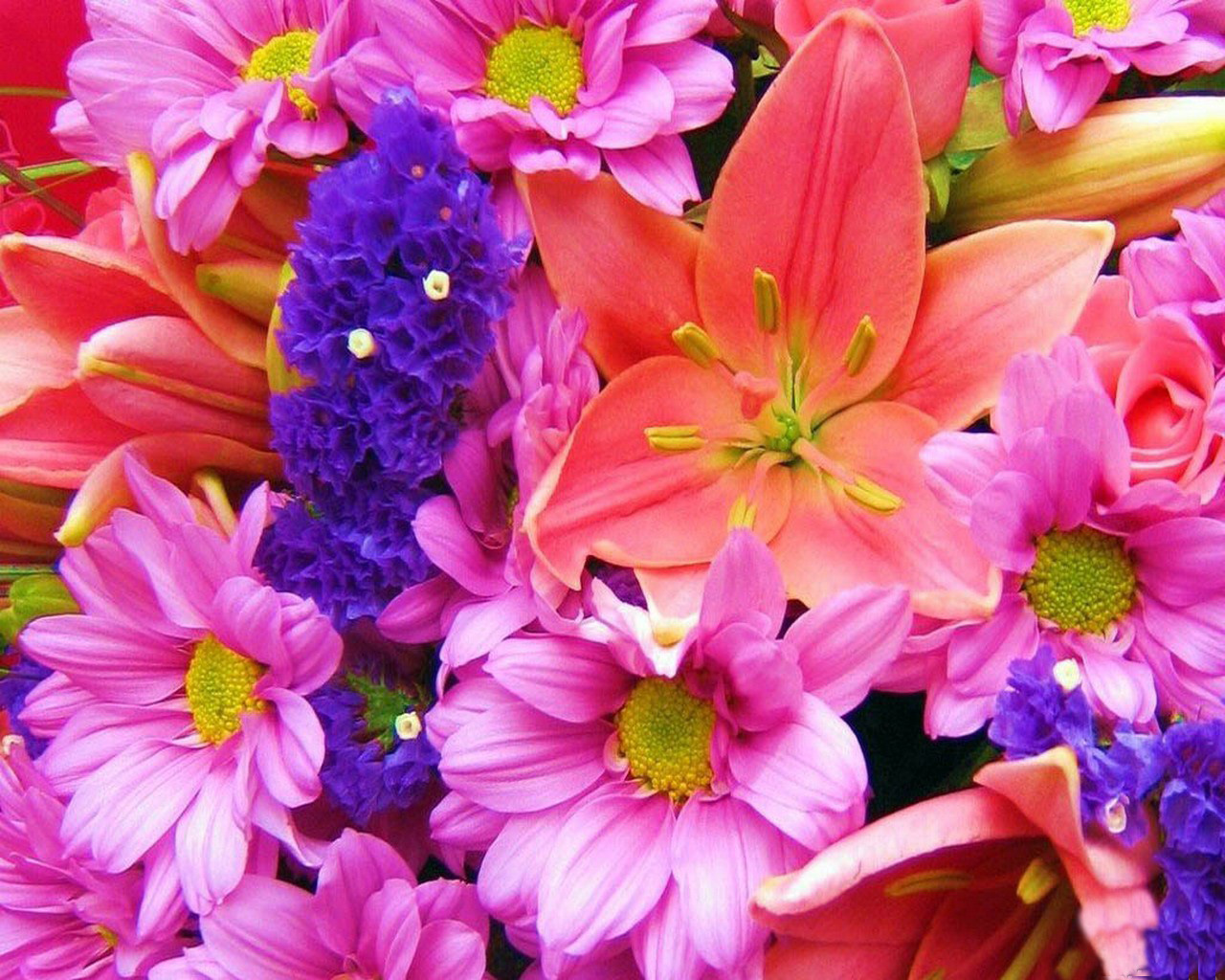 Picture of colorful flowers clipart freeuse download 1600x1000px Pics Of Flowers Colorful | #459548 clipart freeuse download