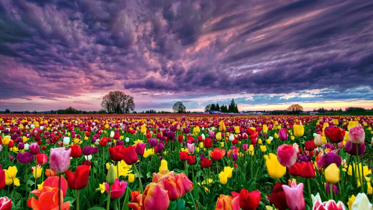 Picture of colorful flowers png freeuse Colorful flowers, Flower wallpaper and Field of flowers on Pinterest png freeuse