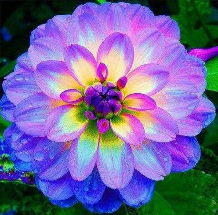 Picture of colorful flowers picture library stock Pics For > Pretty Flowers Backgrounds Colorful | Color Inspiration ... picture library stock
