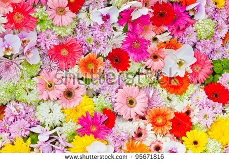 Picture of colorful flowers transparent download Colorful Flowers Stock Images, Royalty-Free Images & Vectors ... transparent download