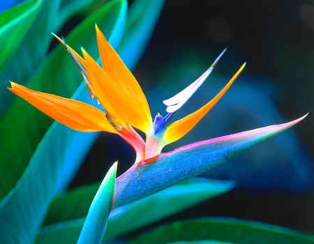Picture of exotic flowers banner free Types Of Tropical Flowers, Dictionary Of, Identifying, Names, Buy ... banner free