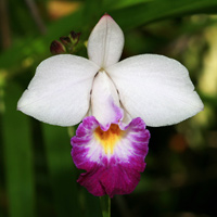 Picture of exotic flowers image freeuse download Exotic Tropical Flowers – Hawaiian Plants and Tropical Flowers image freeuse download