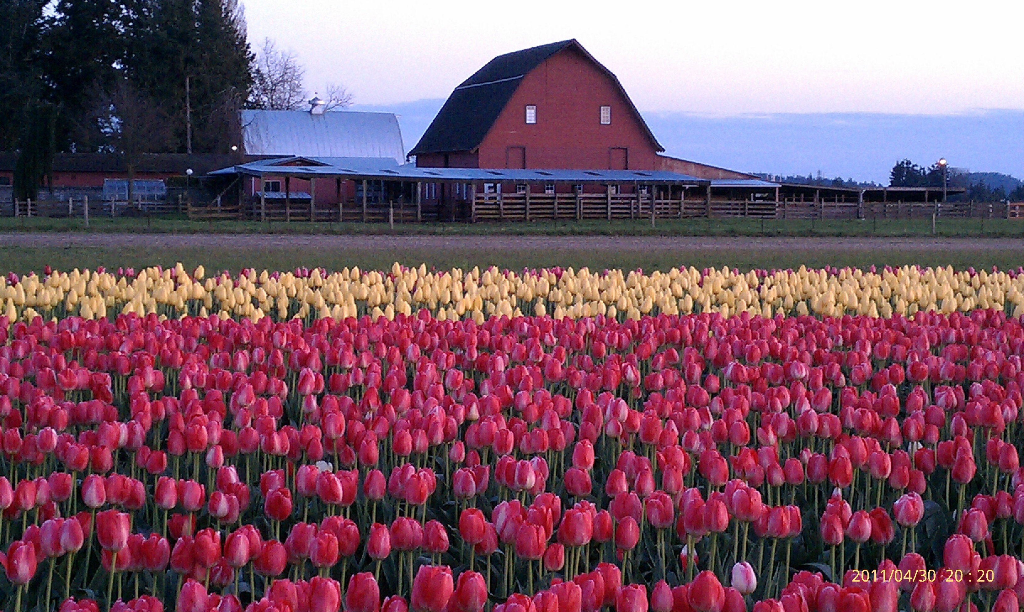 Picture of may flowers image download Camera phone challenge: May flowers - TechRepublic image download