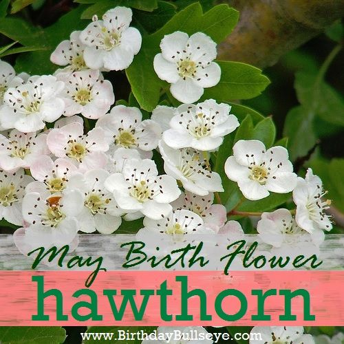 Picture of may flowers vector transparent library 17 Best ideas about May Birth Flowers on Pinterest   Birth flowers ... vector transparent library