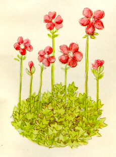 Picture of may flowers freeuse download May Flowers : University of Dayton, Ohio freeuse download