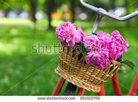 Picture of may flowers png download May Flowers Stock Images, Royalty-Free Images & Vectors   Shutterstock png download