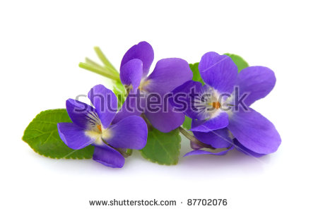 Picture of violets flowers image royalty free Violet Flower Stock Images, Royalty-Free Images & Vectors ... image royalty free