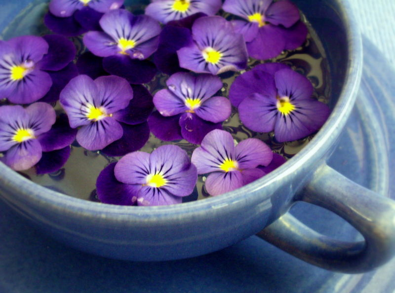 Picture of violets flowers jpg royalty free stock A PIECE OF EUROPEAN TREASURE