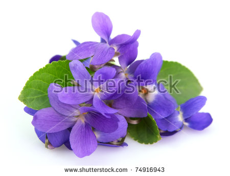 Picture of violets flowers image transparent Violet Flower Stock Images, Royalty-Free Images & Vectors ... image transparent