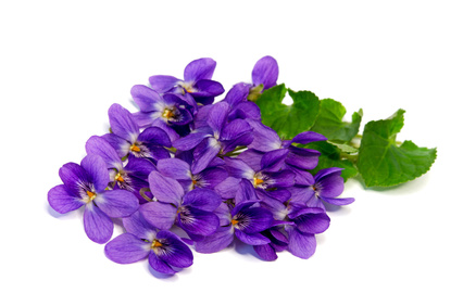 Picture of violets flowers picture free Sweet Violet Flowers are Edible and A True Flower of Love picture free