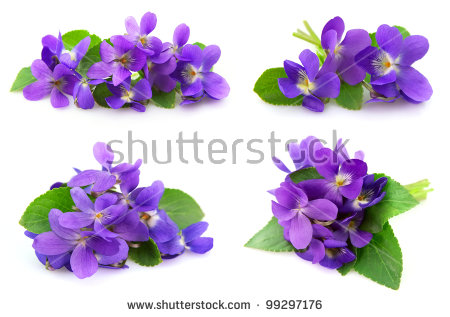 Picture of violets flowers vector transparent Violet Flower Stock Images, Royalty-Free Images & Vectors ... vector transparent