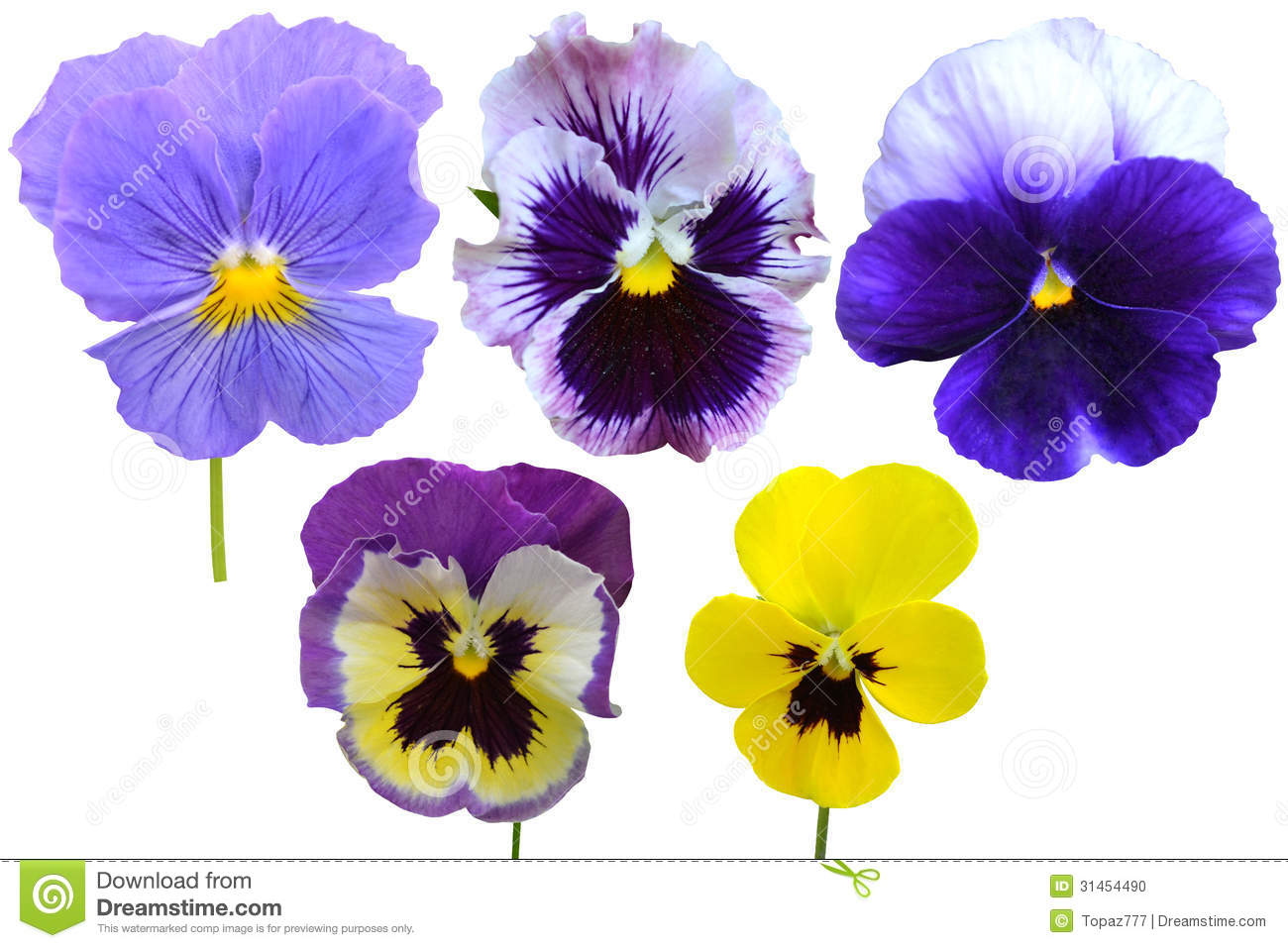 Picture of violets flowers free Wood Violets Flowers Stock Photo - Image: 19049330 free