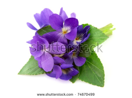 Picture of violets flowers jpg transparent library Violet Flower Stock Images, Royalty-Free Images & Vectors ... jpg transparent library
