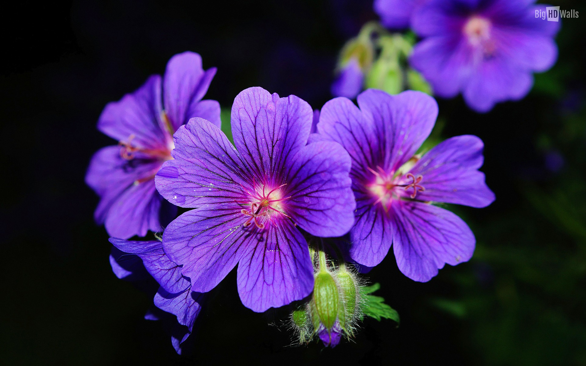 Picture of violets flowers clip royalty free download Pictures of a violet flower - ClipartFest clip royalty free download