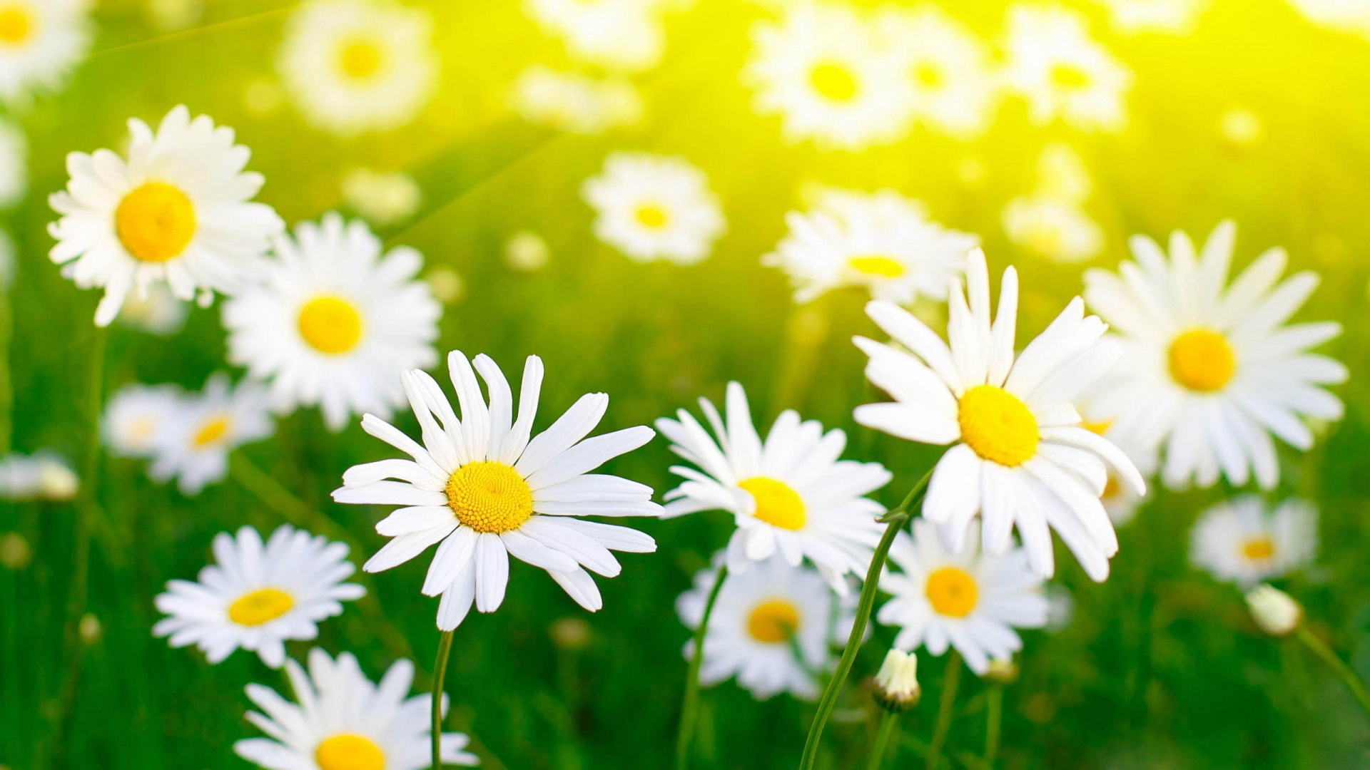 Picture offlowers vector free download Beautiful wallpapers and images of flowers vector free download
