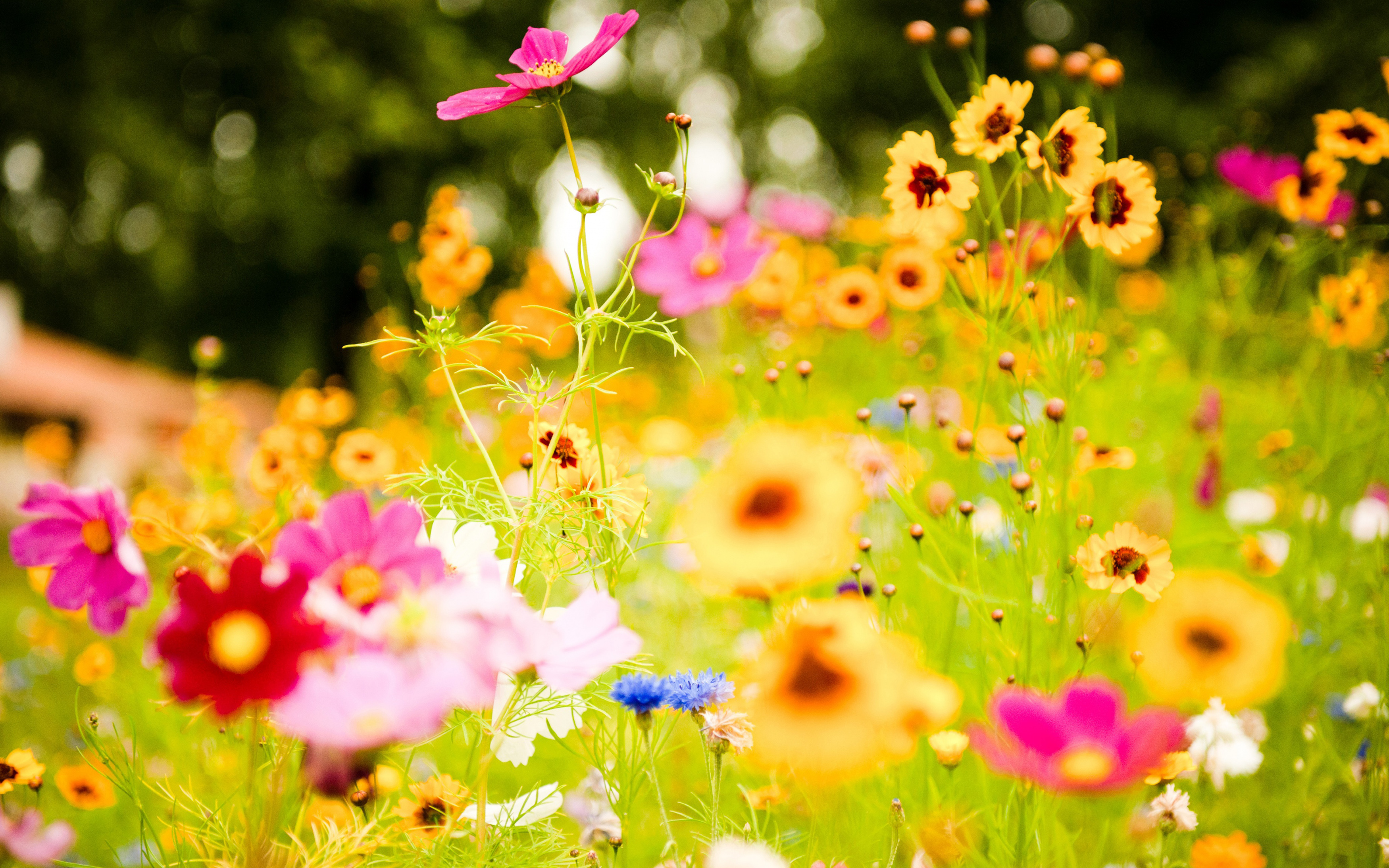 Picture offlowers png 17 Best images about Flowers on Pinterest | Pictures of flowers ... png