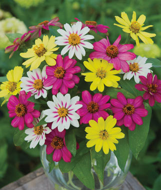 Picture offlowers jpg transparent Annual Flower Seeds & Plants - Buy & Grow Flowers, Bulbs - Burpee.com jpg transparent