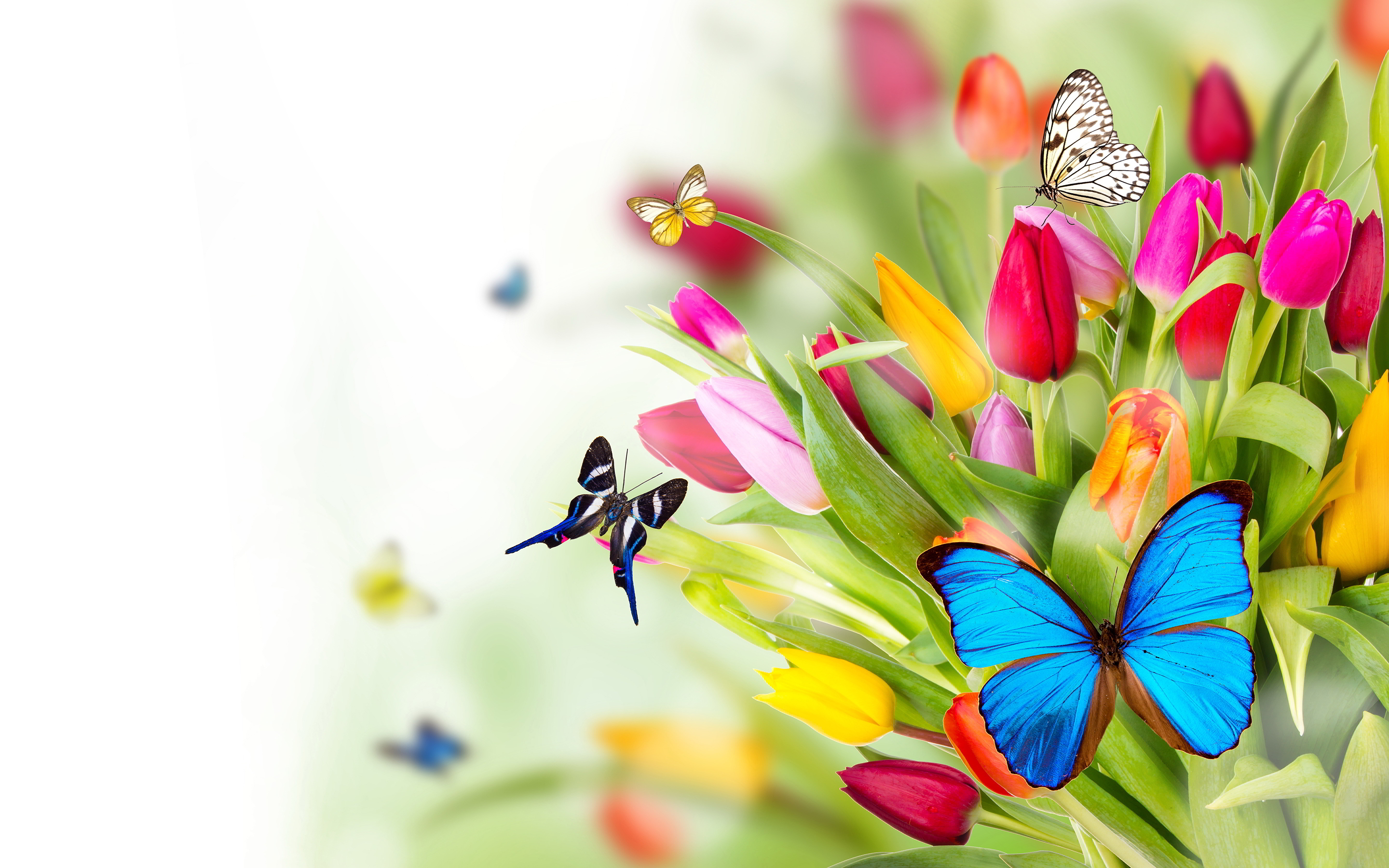 Picture offlowers image free download Flowers in a lot of colors and species image free download