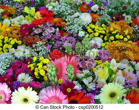 Pictures of free flowers