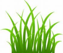 Pictures of tall grass with flowers clipart banner free tall grasses in the jungle clip art - Yahoo Image Search ... banner free