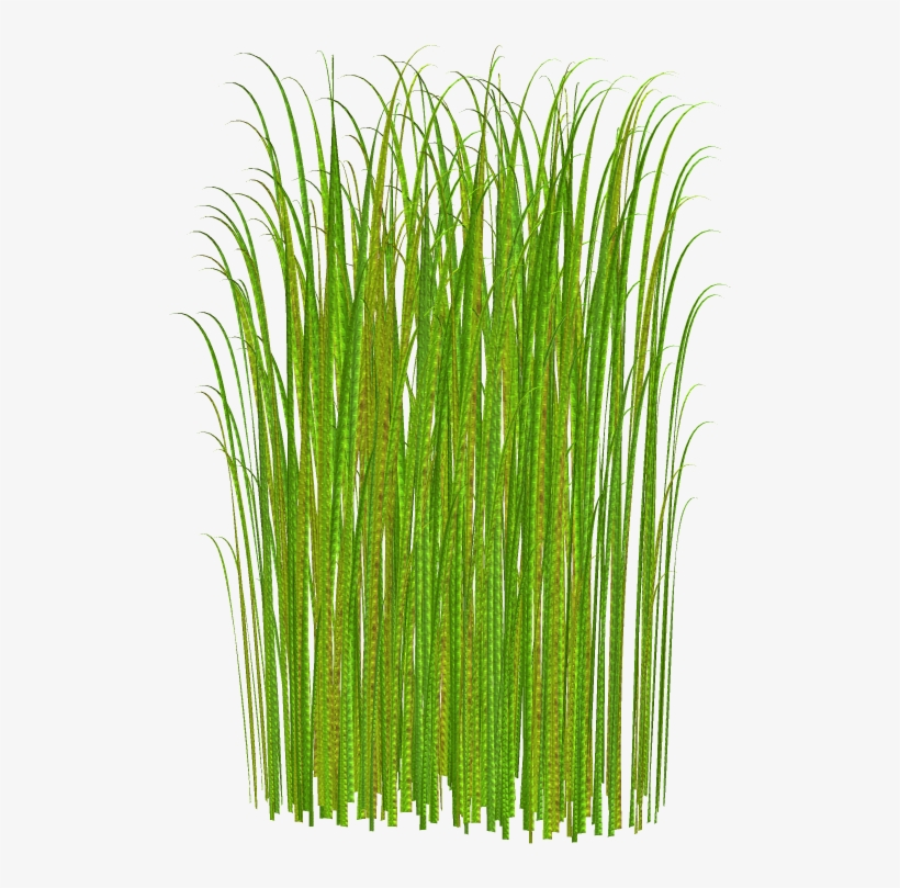 Pictures of tall grass with flowers clipart picture freeuse Png Grass Clipart Transparent - Tall Grass No Background ... picture freeuse